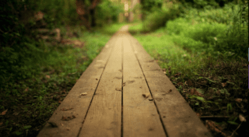 The Healer's Path Homeopathic Medicine