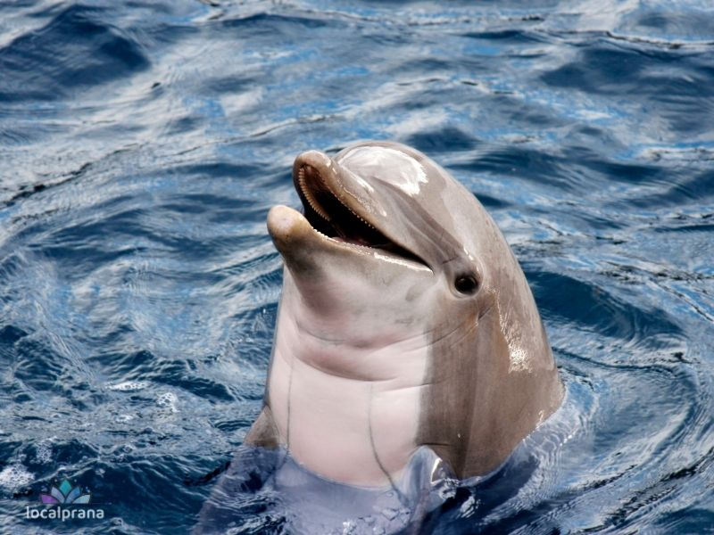 Animal Consciousness - Dolphins