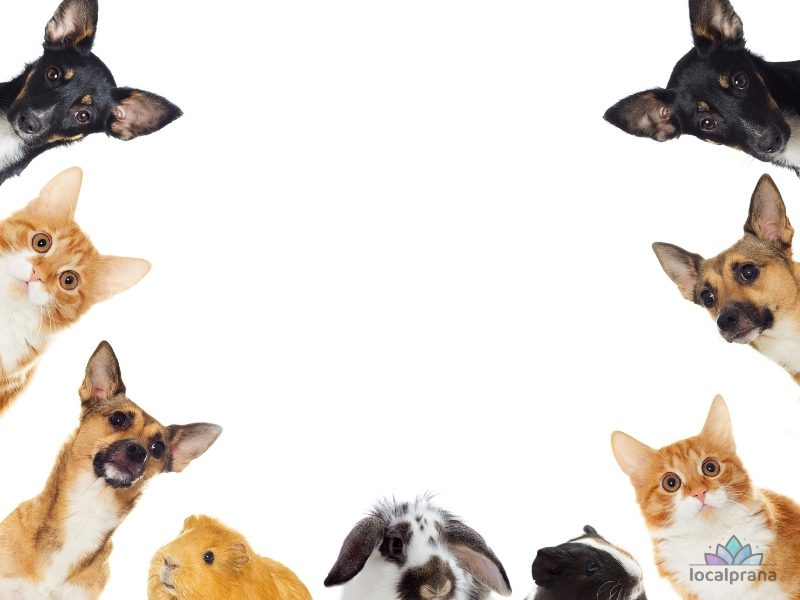 Pet health determines life cycle